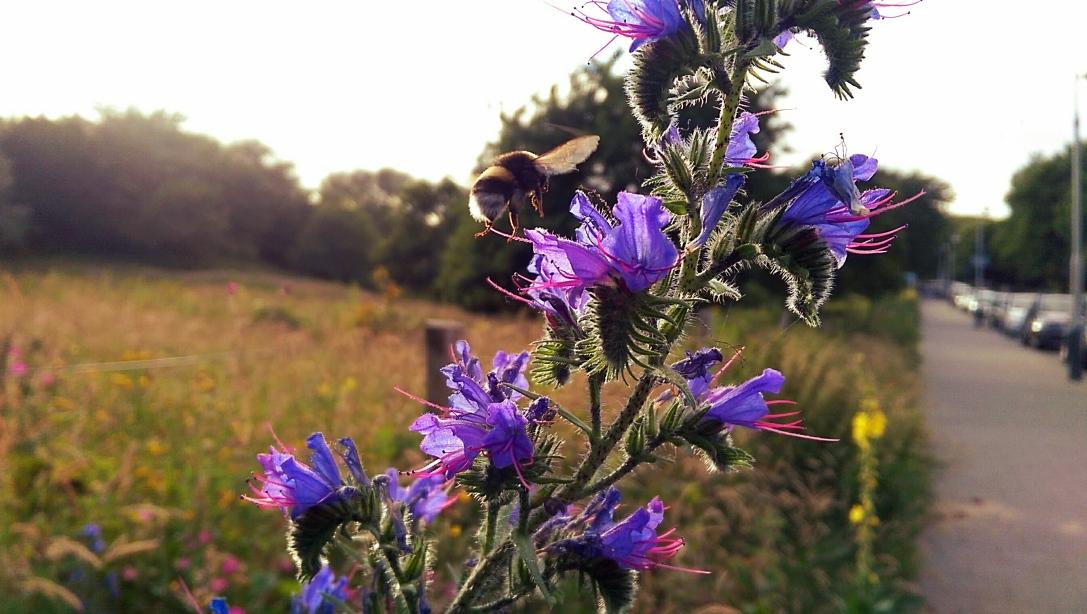 Bee flowers.jpg