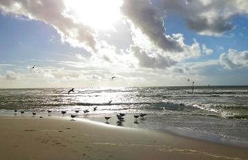 Beach Seagulls.jpg